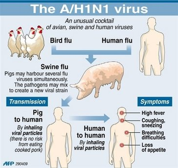 influenza a h1 n1 virus essay H1n1 flu is also known as swine flu it's called swine flu because in the past, the people who caught it had direct contact with pigs that changed several years ago, when a new virus emerged that.
